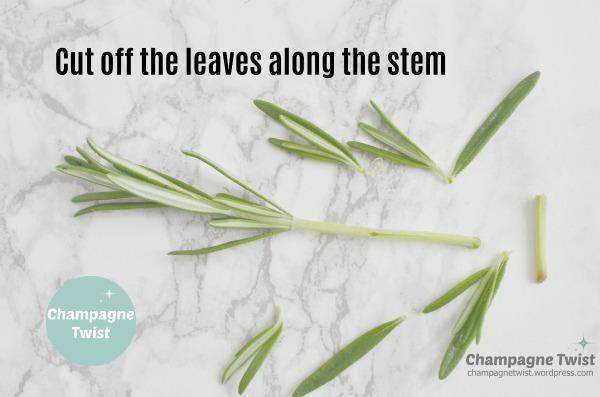 leaves stem