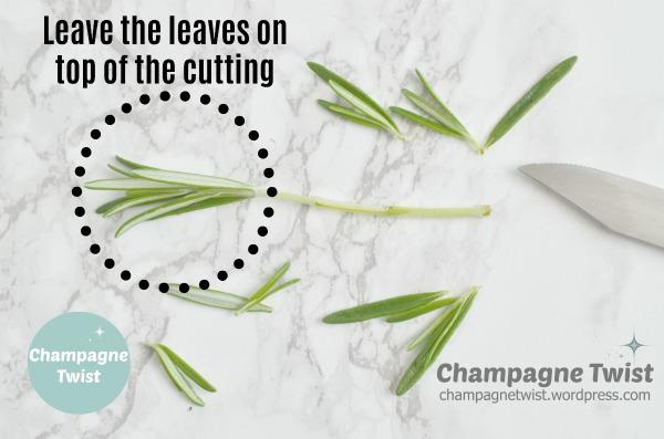 Herb cutting propagation