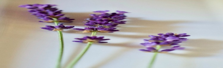 lavender | www.champagnetwist.com